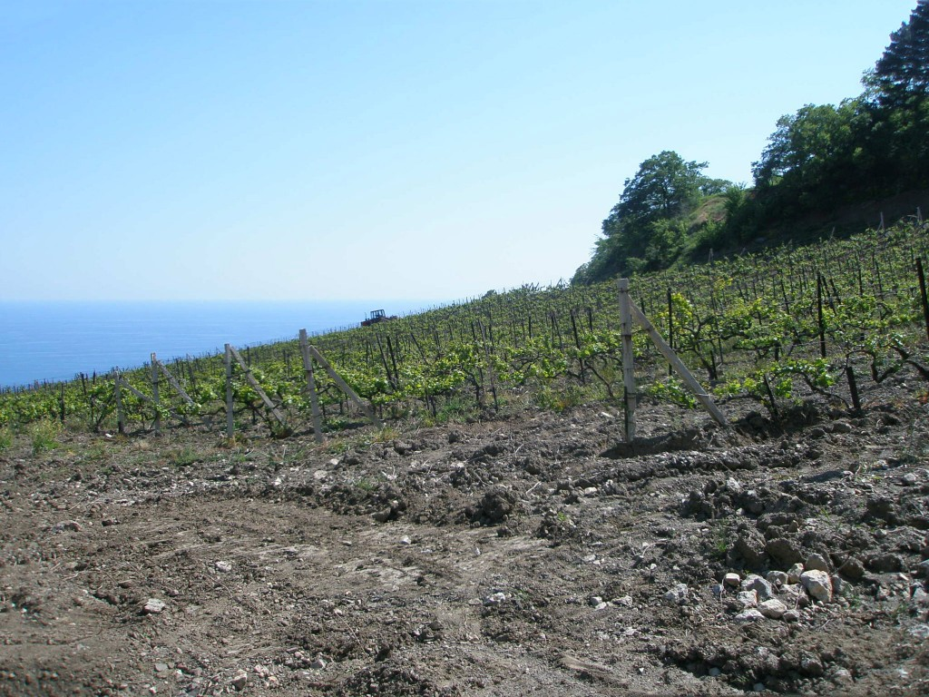 бутылок вина и сбор винограда