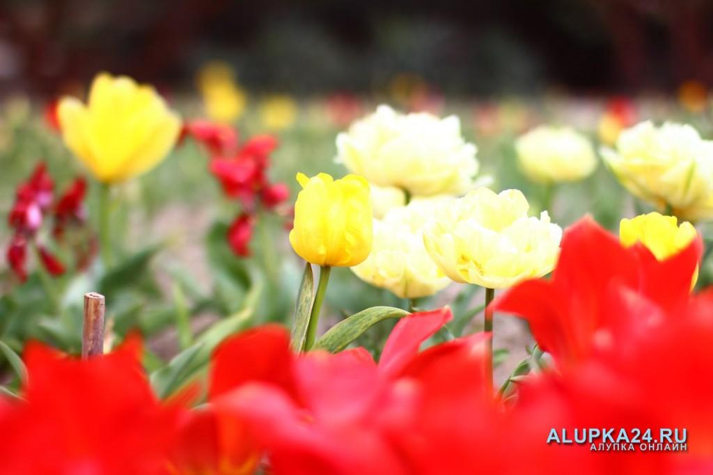 «Парад тюльпанов»  2015