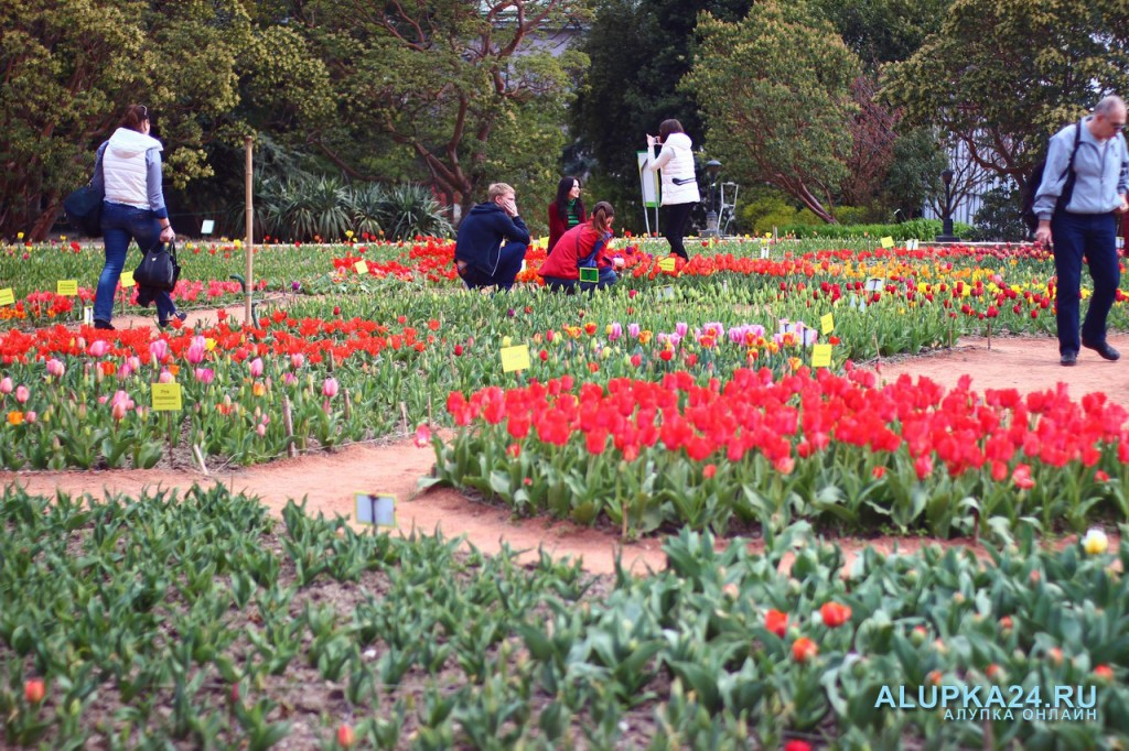 В Никитском Ботаническом саду представили «Парад тюльпанов»
