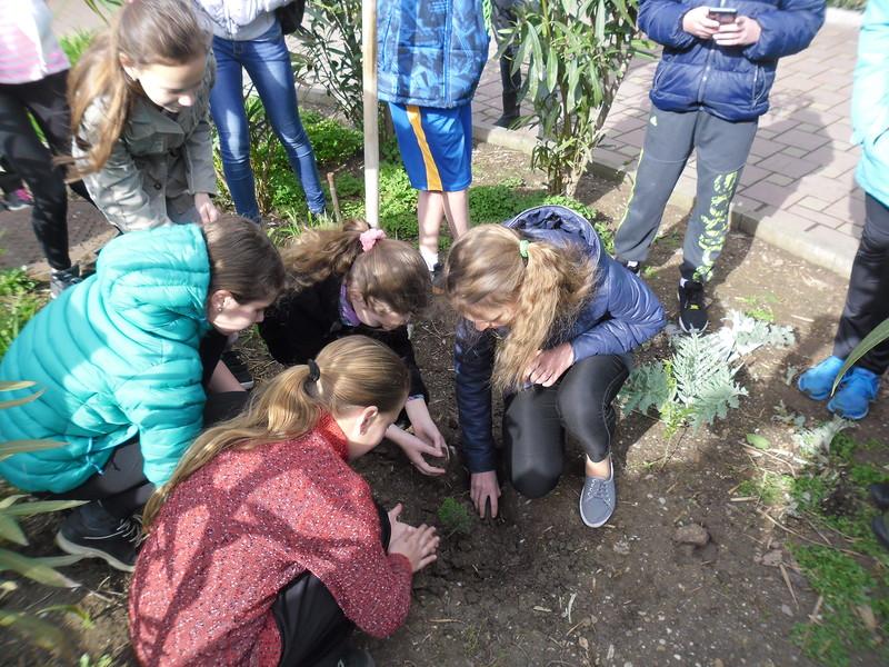 Большая Ялта приняла участие во всероссийской акции «Мы за сохранение лесов России!»