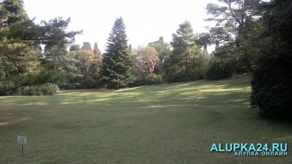 """""""Солнечная поляна"""" - самая большая поляна в парке"""