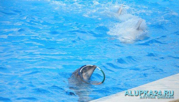 Крымские школьники смогут посетить дельфинарий в Евпатории по льготным ценам