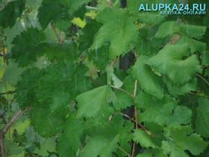 Погода в Алупке 16 мая и погода в Алупке 5 июня