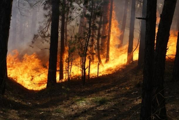 В Алупкинском лесничестве произошёл пожар