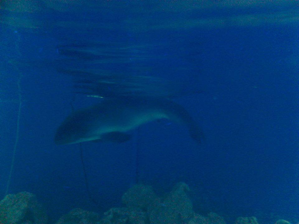 Выбросившегося на берег Большой Ялты дельфина отвезли в зоопарк «Сказка»