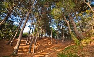 В Никитском Ботаничесом саду восстановят парк «Монтедор»