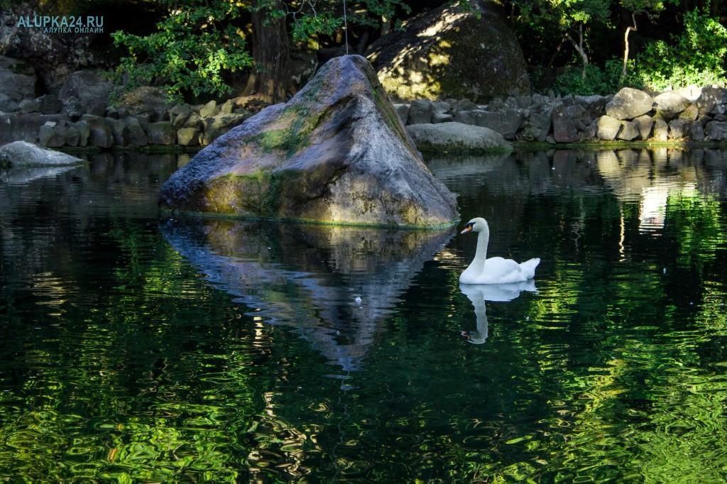 Лебедь в Большом озере