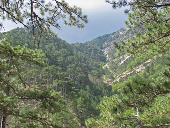 В горах Большой Ялты спасли пострадавшую туристку из Москвы