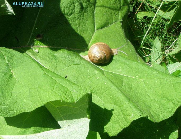 Крымчан в День виноградарства научат готовить устриц и улиток
