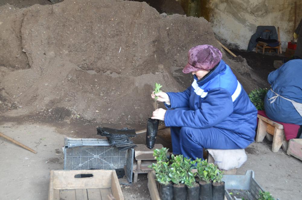 В «Приморском» отделении НБС начали закладку коллекционных садов