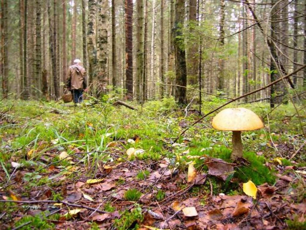 В горах Большой Ялты разыскивают потерявшегося пенсионера