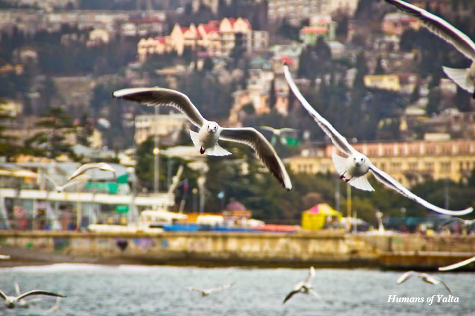 Чайка над морем в Ялте