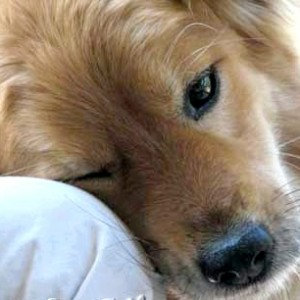 Приюту собак нужна помощь в содержании.