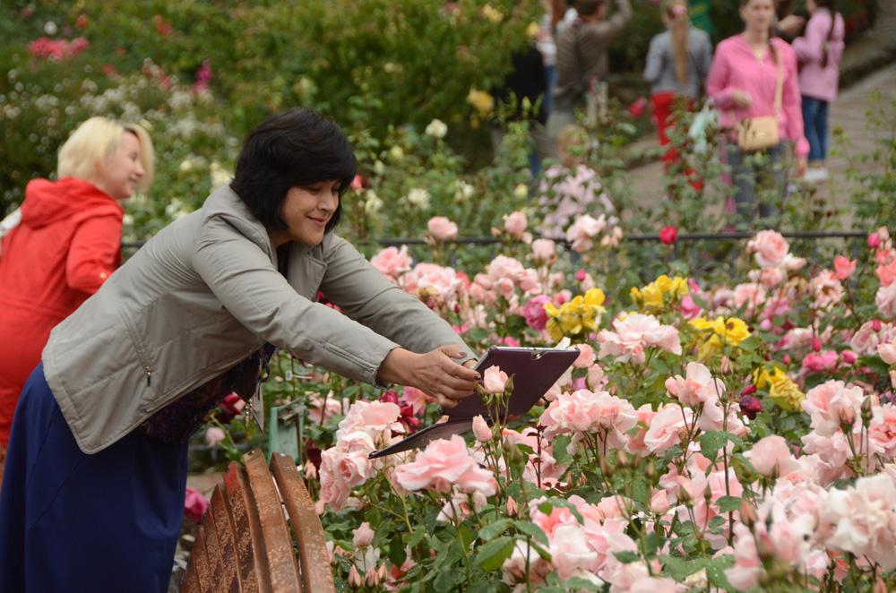 Розы Никитского ботанического сада 6