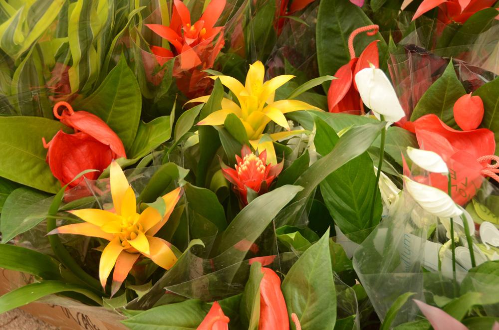 Орхидеи в Никитском ботаническом саду 5