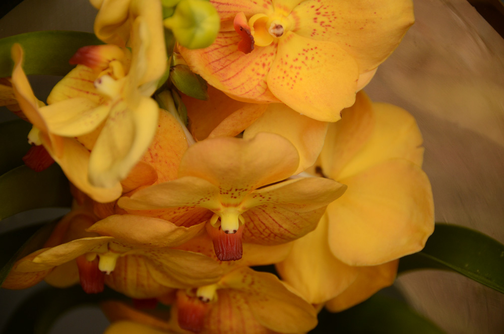 Орхидеи в Никитском ботаническом саду 4