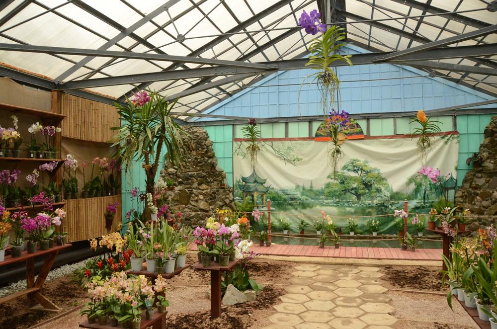 Орхидеи в Никитском ботаническом саду 6