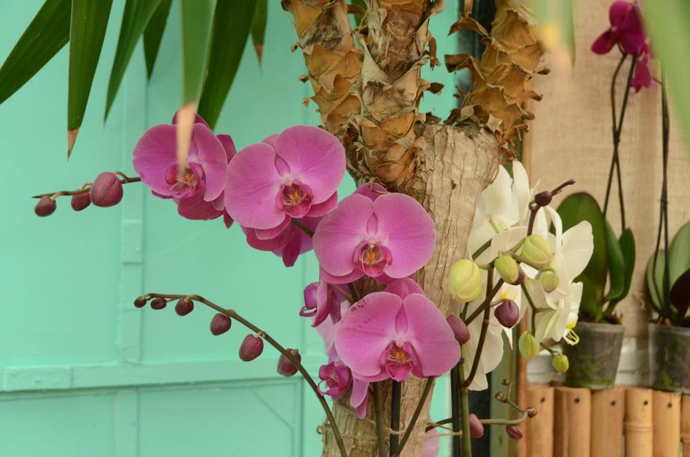 Орхидеи в Никитском ботаническом саду 2