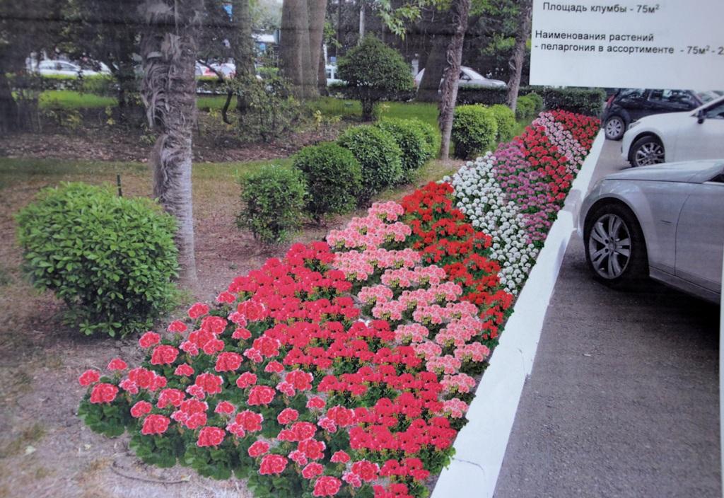 Большую Ялту озеленят цветочными клумбами  3