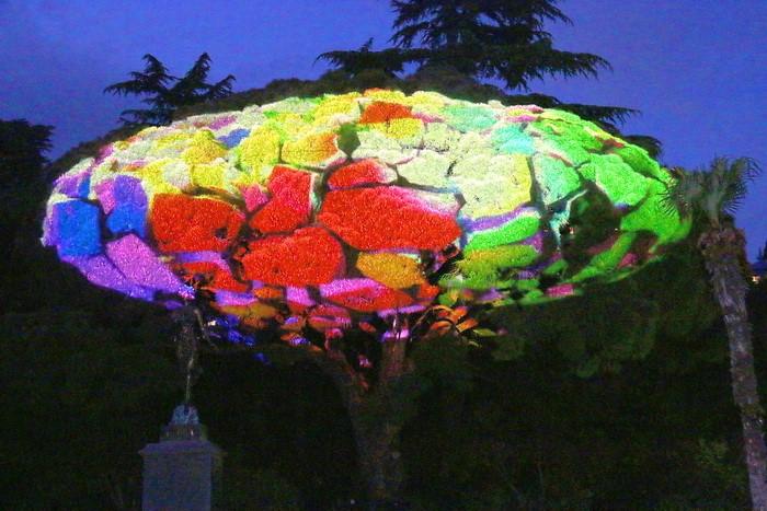 3D шоу в Никитском ботаническом саду 4