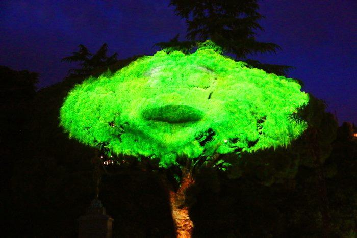 3D шоу в Никитском ботаническом саду