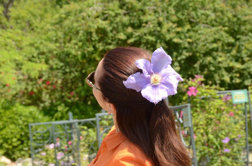 Клематисы в Никитском ботаническом саду 3