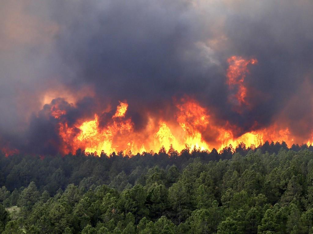 В Большой Ялте в ночь на 3 августа горел лес