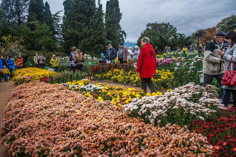 Хризантемы в Никитском Ботаническом саду 2016