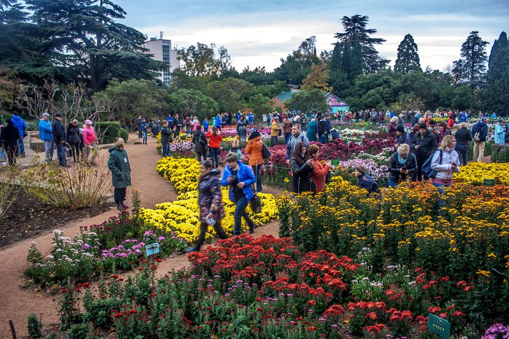 Хризантемы в Никитском Ботаническом саду 2016 2