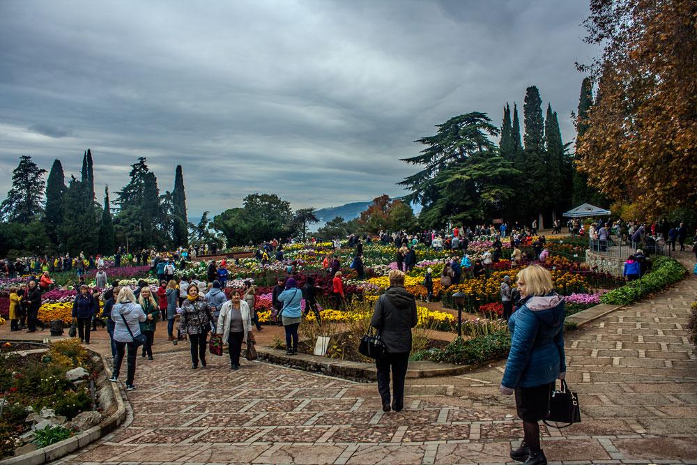 Хризантемы в Никитском Ботаническом саду 2016 9