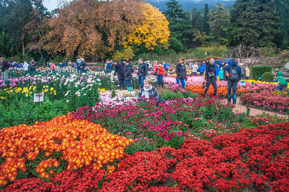Хризантемы в Никитском Ботаническом саду 2016 10