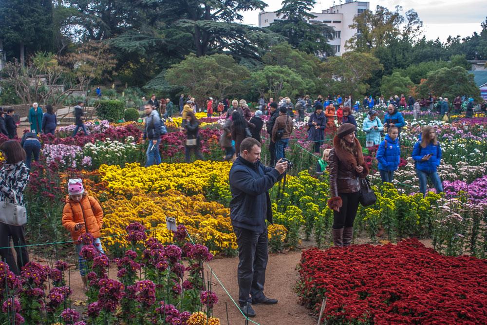 Хризантемы в Никитском Ботаническом саду 2016 11