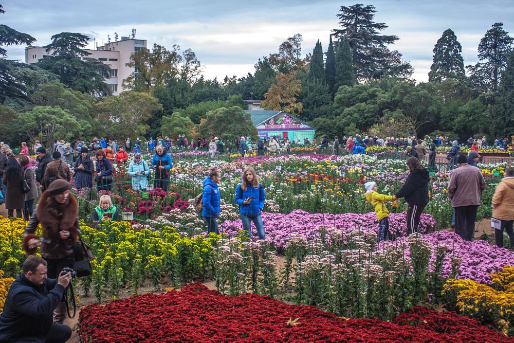 Хризантемы в Никитском Ботаническом саду 2016 12