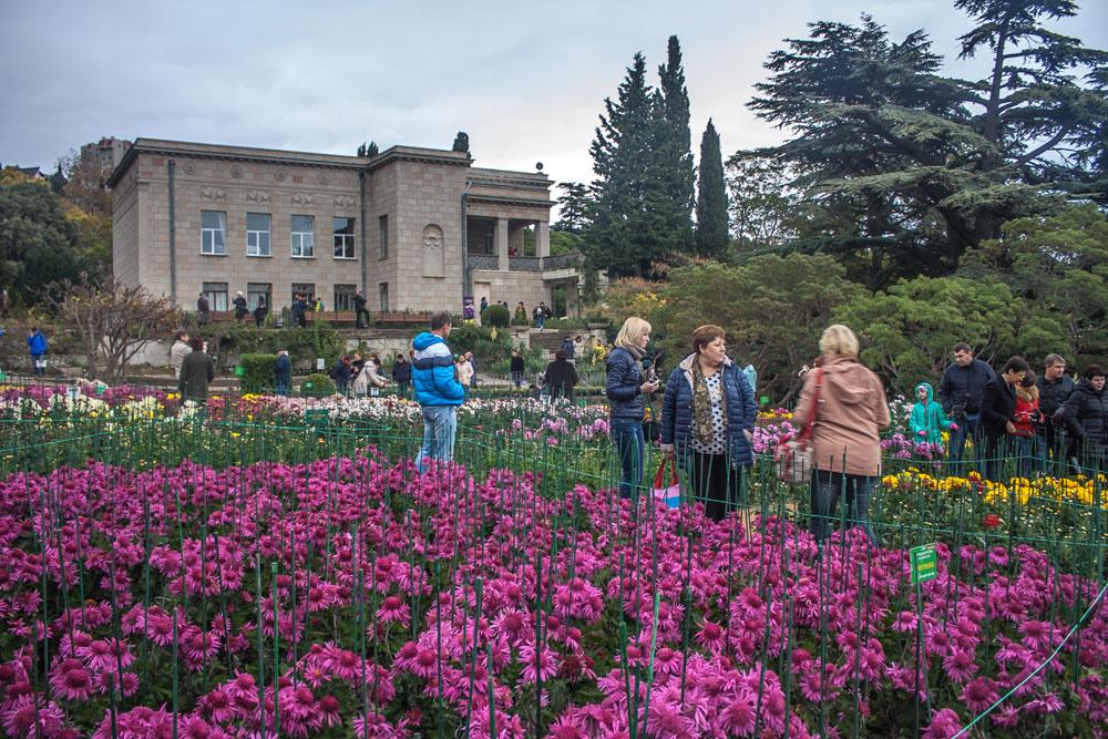Хризантемы в Никитском Ботаническом саду 2016 13