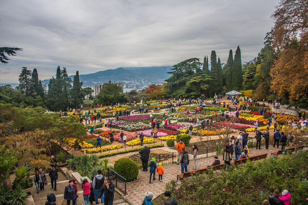 Хризантемы в Никитском Ботаническом саду 2016 14