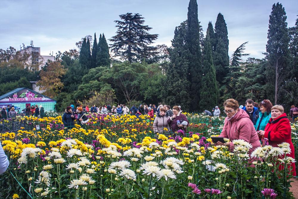 Хризантемы в Никитском Ботаническом саду 2016 15
