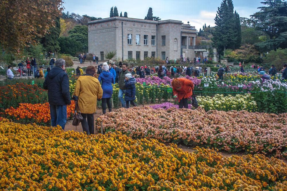 Хризантемы в Никитском Ботаническом саду 2016 16