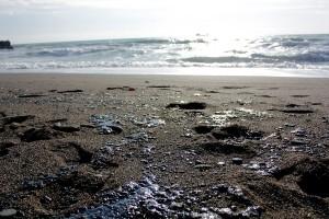 На побережье Судака разлился мазут