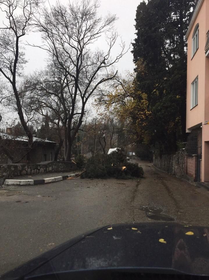 Последствия штормового ветра в Большой Ялте 3