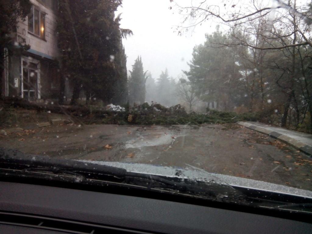 Последствия штормового ветра в Большой Ялте 4