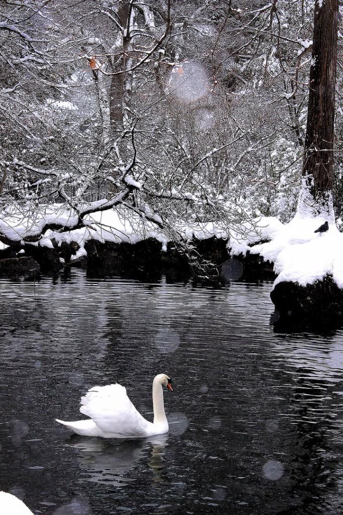 Пейзажи зимнего города (Алупка фото) 4