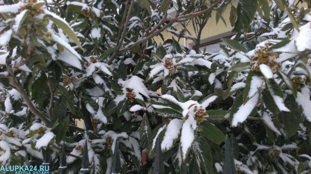 Алупка в снегу зимой 2017 6