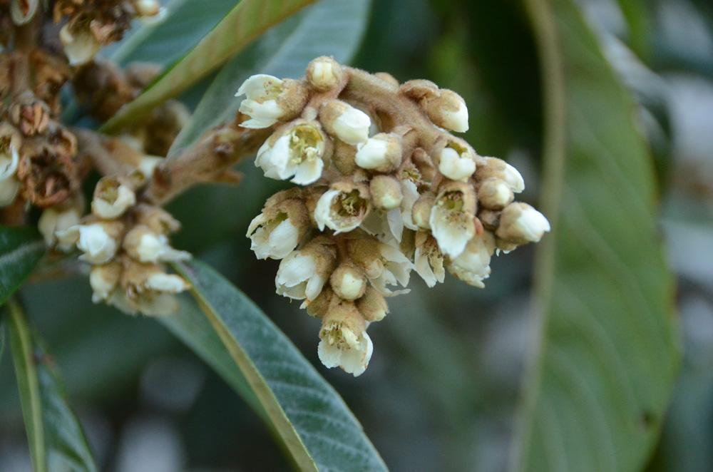 Никитский Ботанический сад бесплатно примет студентов 25 января 4