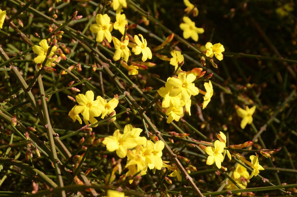 Никитский Ботанический сад бесплатно примет студентов 25 января 6