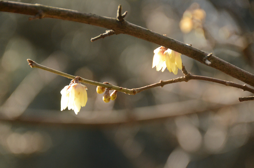 Никитский Ботанический сад бесплатно примет студентов 25 января 7