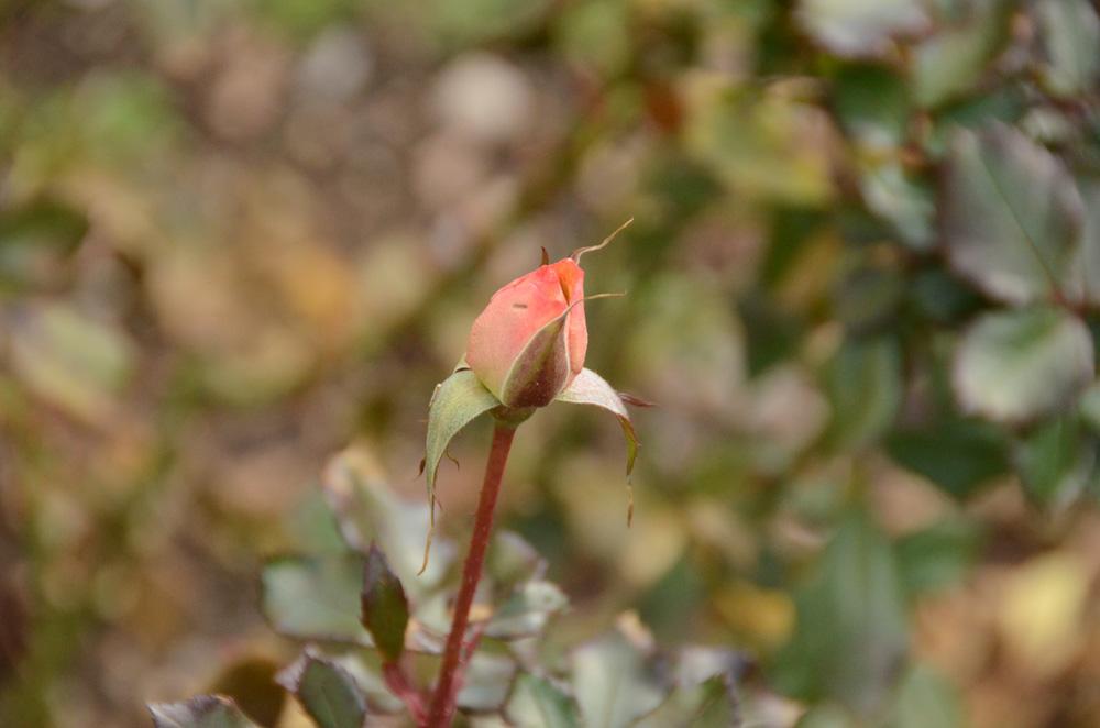 Никитский Ботанический сад бесплатно примет студентов 25 января 9