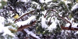 Пейзажи зимнего города (Алупка фото)