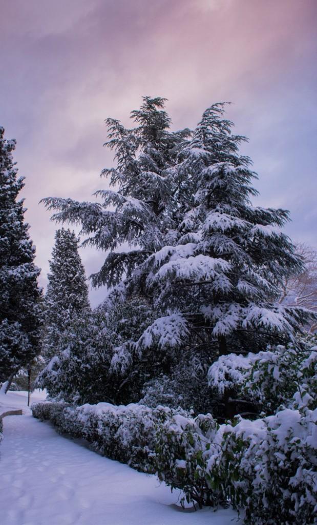 Пальмовая аллея в Воронцовском парке (Фото: Екатерина Лагодная) 2