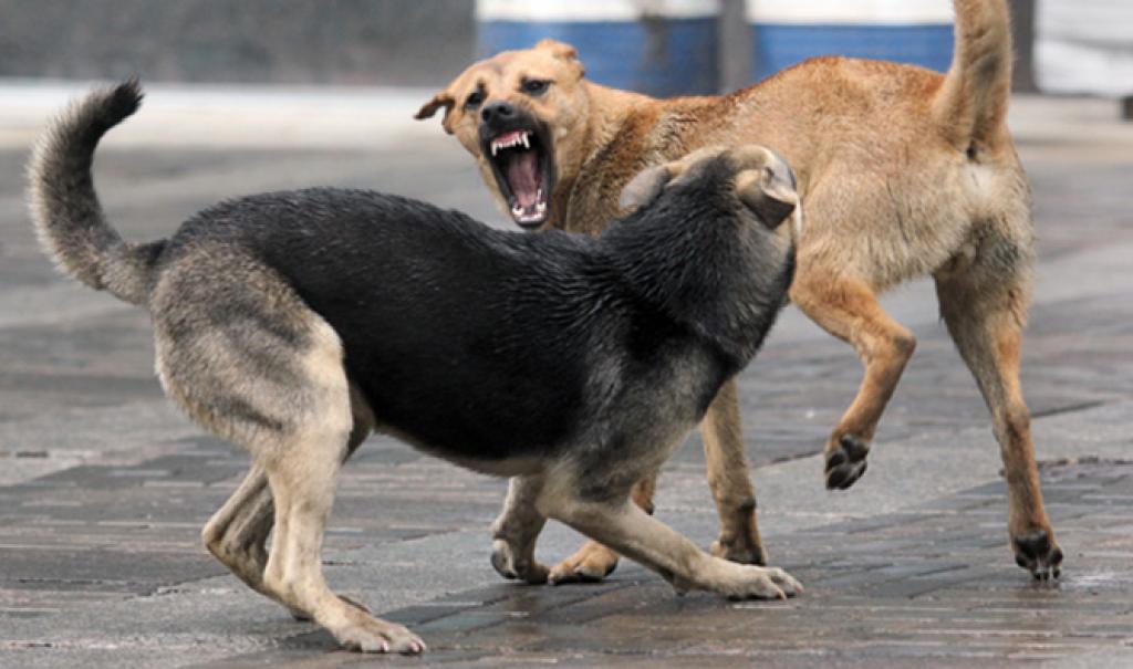 В Ялте займутся отловом бродячих собак