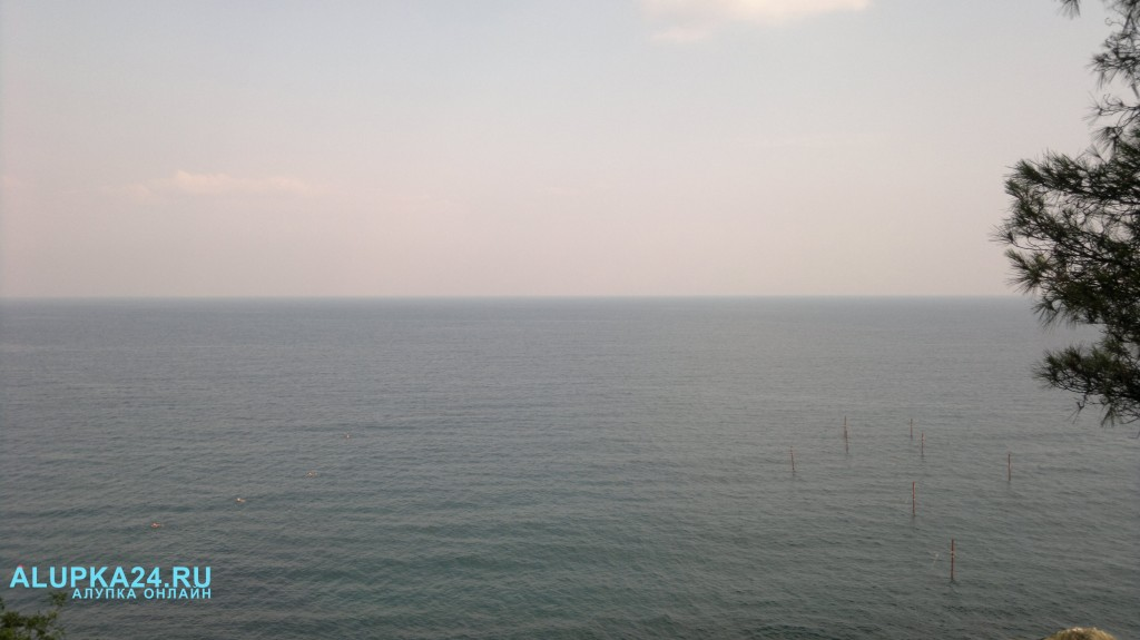 В Алупке в установленных у берега рыболовецких сетях гибнут дельфины